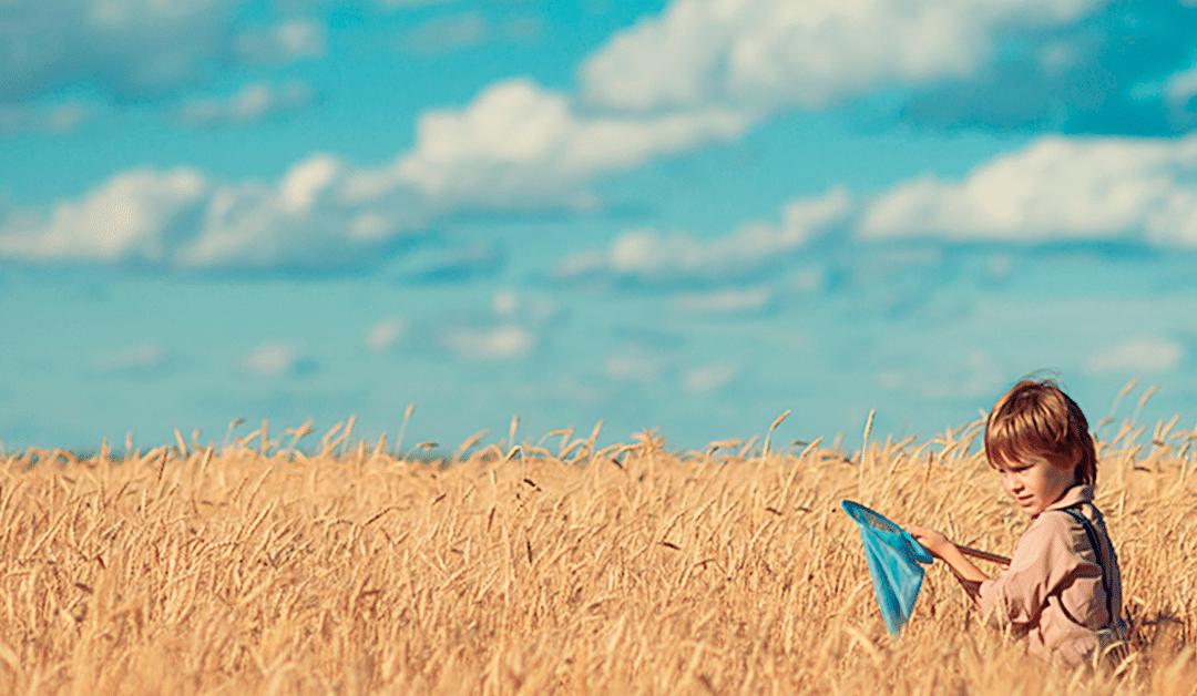 Un site contre l'utilisation de pesticides à Lasne